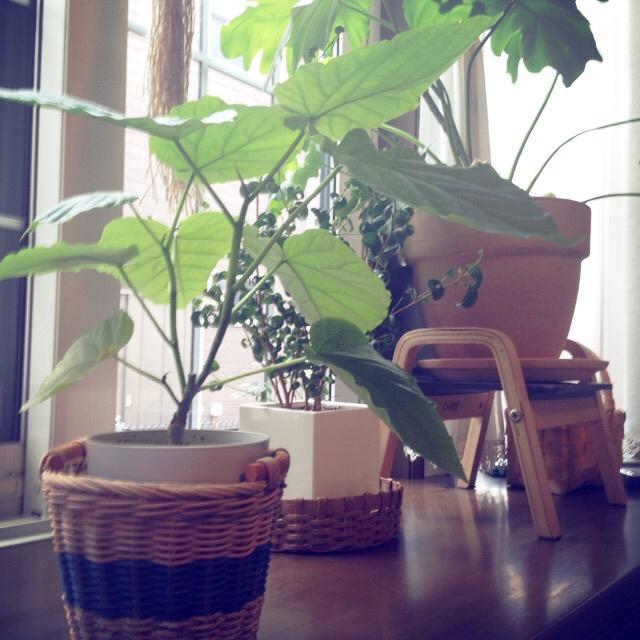 植木鉢をカゴに入れて飾ってみて♪