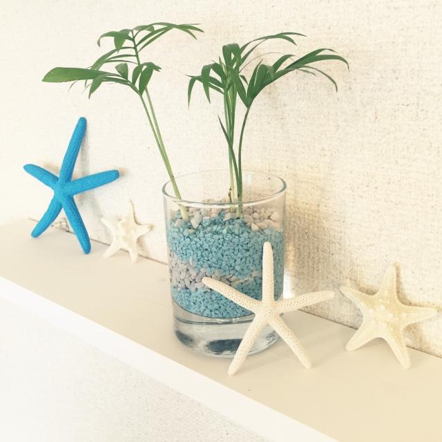 ミニ観葉植物と貝殻
