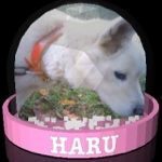 haru0_44