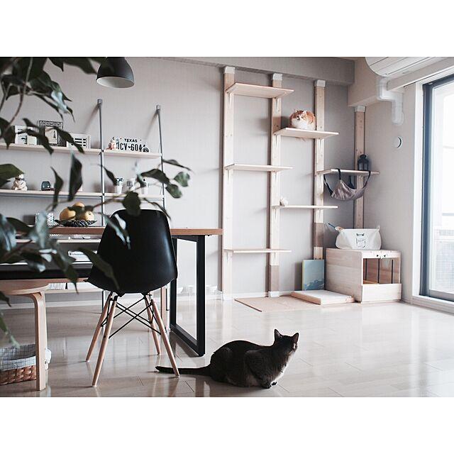 ネコちゃん大好き♡キャットタワー