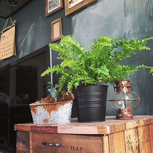 【日替わり投稿企画☆木曜】植物好き必見!お家の植物成長記録ゾクゾク。