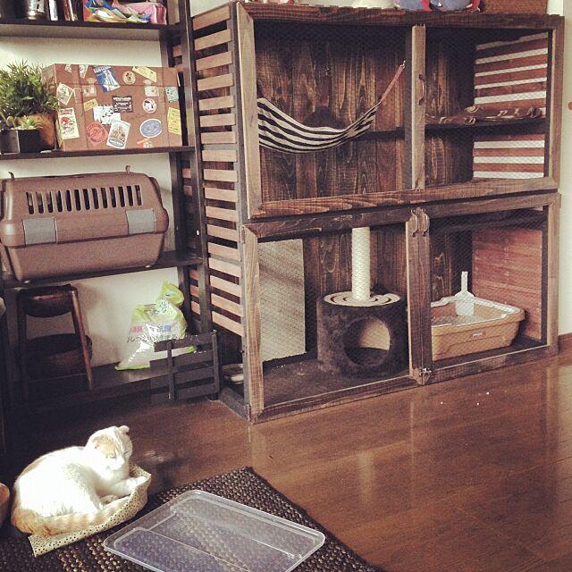 On Walls,DIY,猫,手作り,ジャンク,板壁,すのこ,ダイソー,100均,IKEA,ねこ部に入りたい,猫のお家もかっこよく♡,ねこのいえ,男前,ふくたろう,猫大好き,ねこばかりですいません,猫さん,スコティッシュフォールド,ワトコオイル onojiijiの部屋