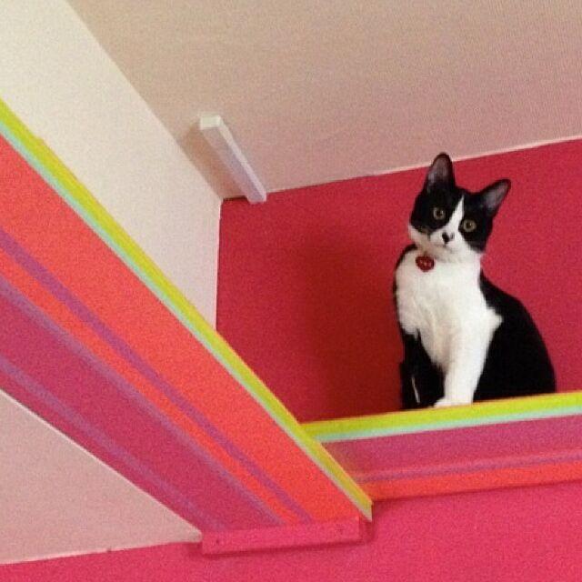 On Walls,ペットインテリア,手作り,DIY,猫,キャットウォーク,キャットウォークDIY kimishigureの部屋