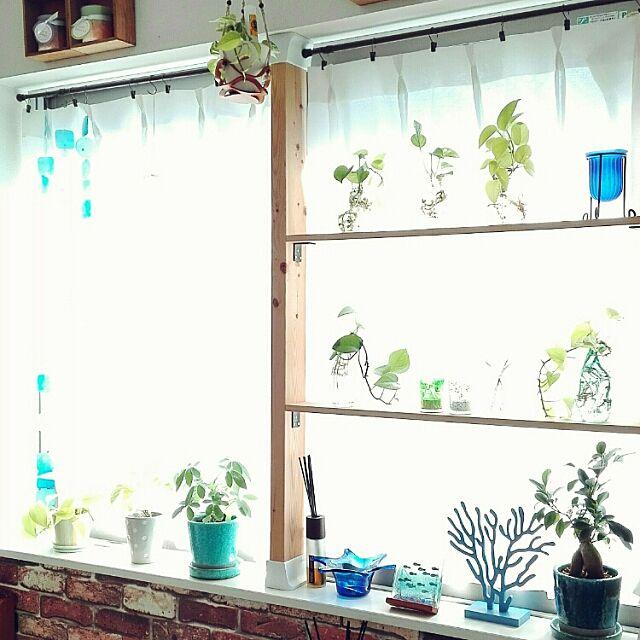 My Shelf,1K,一人暮らし,賃貸マンション,DIY,ディアウォール,観葉植物,DULTON maiの部屋
