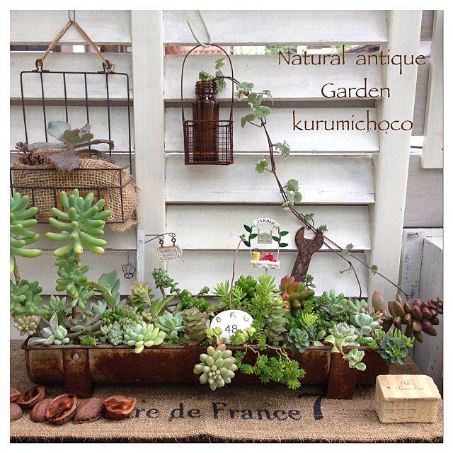 My Shelf,古道具×GREEN,JUNK,サビサビ雑貨,多肉,多肉植物,セダム,ガーデニング,ベランダガーデンkurumichoco,植物のある暮らし kurumichocoの部屋