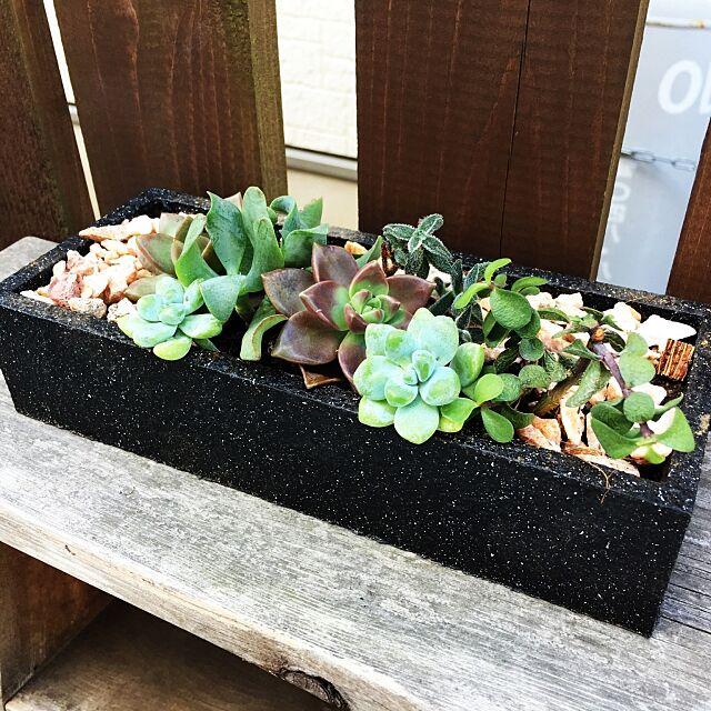 My Shelf,植木鉢リメイク,多肉寄せ植え,まるで石すっごいリアルゥ〜,染めQ kyosuenagaの部屋