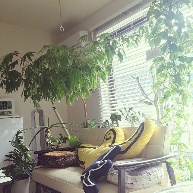 Overview,植物,NO GREEN NO LIFE,セロウム,ハオルチア,エバーフレッシュ,ユーフォルビア,カリモク abetomooooooの部屋