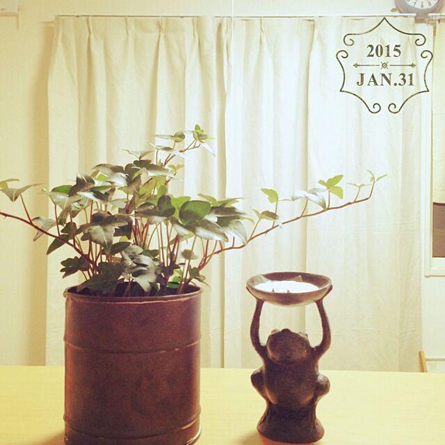 Lounge,植物,ふたりぐらし,1LDK,雑貨,新居,キッチンからの景色,時計の位置は暫定,二人暮らし,無印良品,無印良品のカーテン,観葉植物,カエル kawaayuuuの部屋