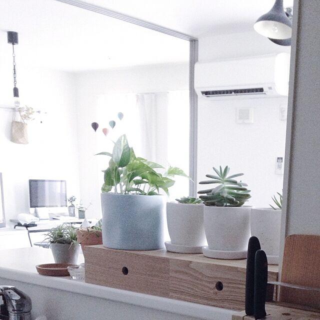 Kitchen,無印良品,賃貸インテリア,シンプルインテリア,賃貸,観葉植物,シンプルな暮らし,無印,IKEA,MDF小物収納1段 tsuchi_aの部屋