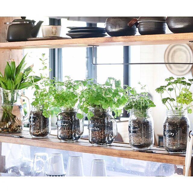 Kitchen,自家製ハーブ,ハーブ栽培,キッチンハーブ,セリア,メイソンジャー yupinokoの部屋