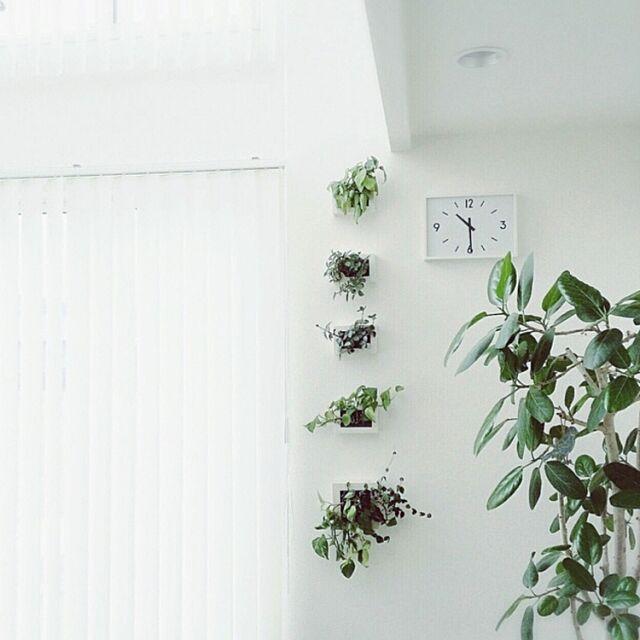 On Walls,無印良品,植物,リビング,植物のある生活,シンプル,吹き抜けのある家,グリーンのある暮らし,観葉植物,植物のある暮らし,インテリア,ナチュラル,ソフトジャングル,植物のある部屋,花のある暮らし chihomilkの部屋