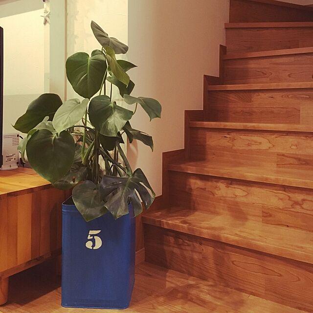 Lounge,ディアウォール,植物が好き,植物のある暮らし,ステンシル初心者,モンステラ,観葉植物,DIY,リメ缶 nikochanmanの部屋