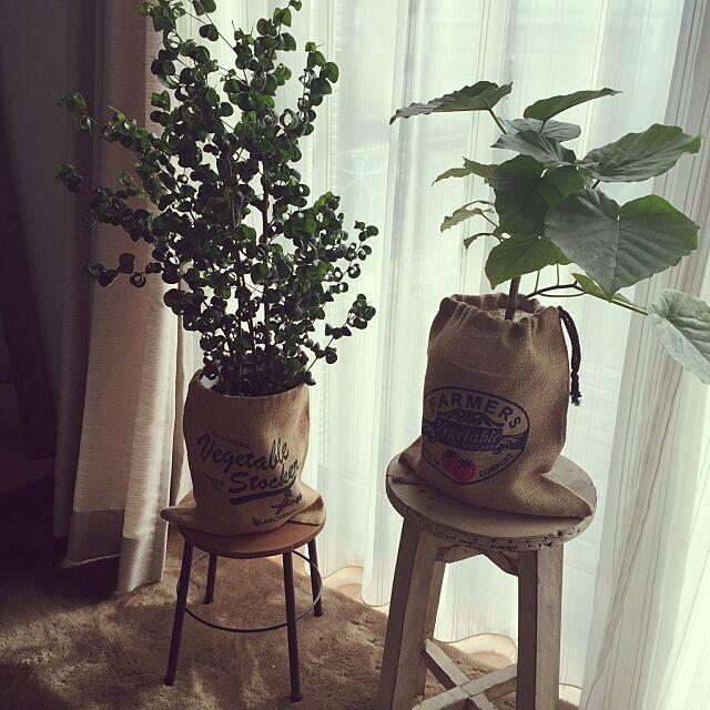 観葉植物,セリア,ウンベラータ,ベンジャミンバロック,いす,鉢カバー,ジュート,日光浴,逆光,Lounge cavaの部屋