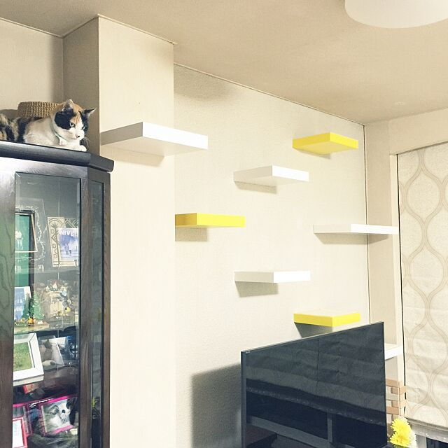Lounge,キャットウォーク,ねこと暮らす。,キャットウォークDIY,IKEA mtkの部屋