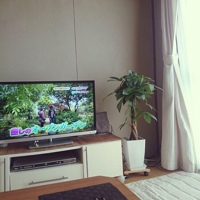 Lounge,テレビ,テレビ周り,団地,観葉植物,パキラ,テレビ台,おはようございます♡ akiの部屋