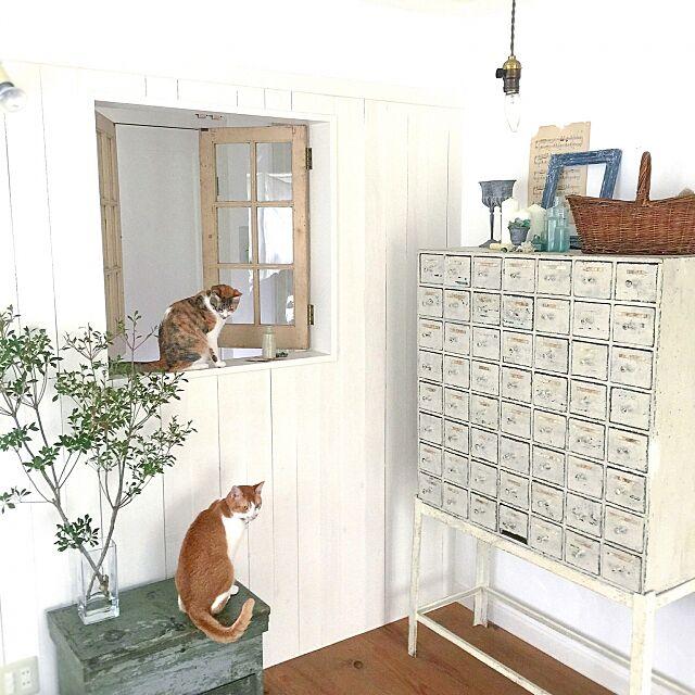 My Shelf,アトリエ,シンプル,漆喰,ナチュラルフレンチ,植物のある暮らし,窓,ナチュラル,白,グリーンのある暮らし,アンティーク,猫 midoriの部屋