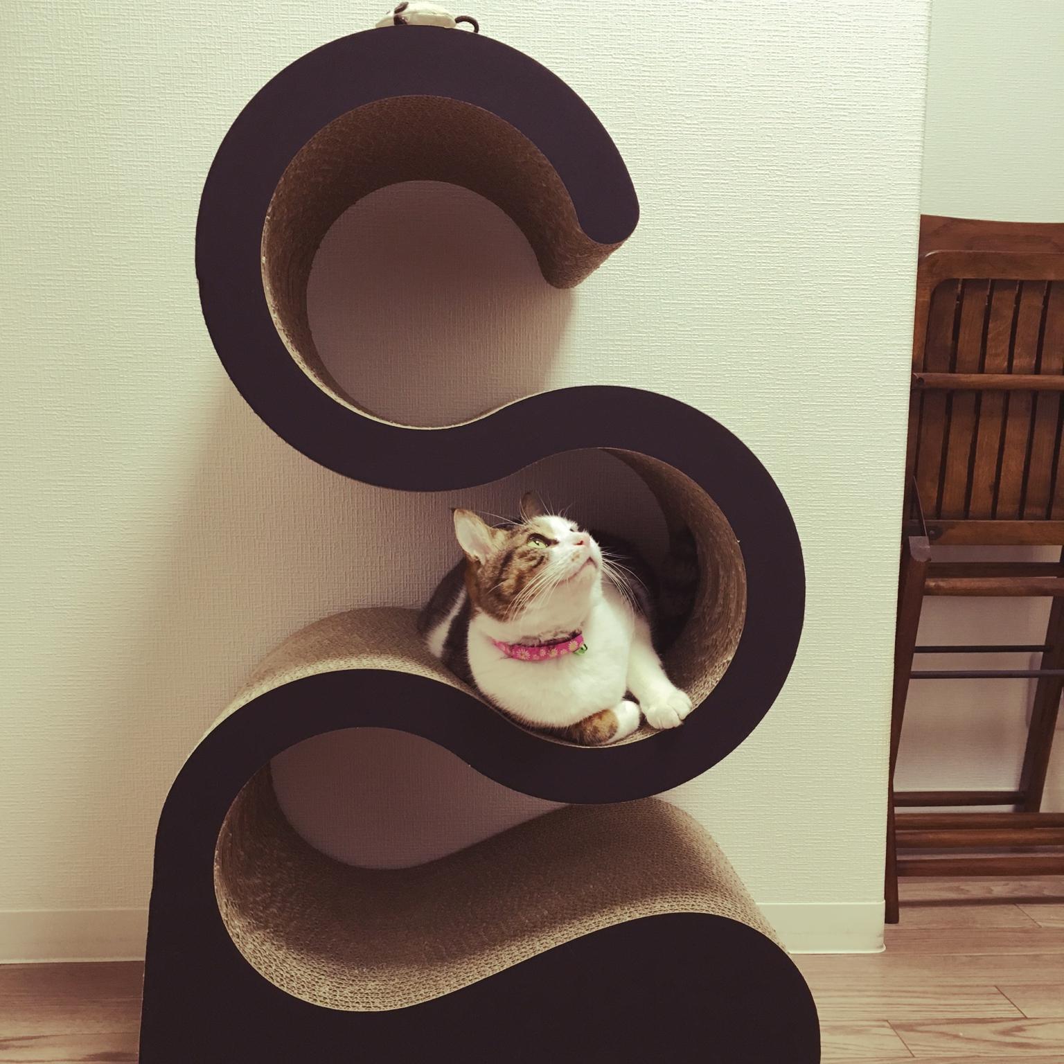 女性で、のキャットタワー/猫/部屋全体についてのインテリア実例を紹介。