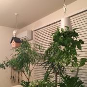 まるで植物園!?吊るして楽しむ植物の新たな一面♪
