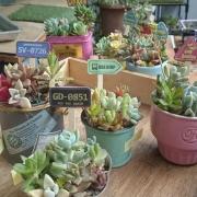 すぐにできる♡100均雑貨を使った植物の飾り方