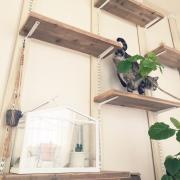愛猫用♡キャットウォーク!可動式で棚&ディスプレイOK♪ by mikomaruさん