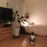 ハンドメイド/ガーランド/猫/無印良品/tomotake/Lounge…などに関連する他の写真