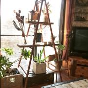 お家の中にも緑を♪素敵な「窓際のグリーン」実例