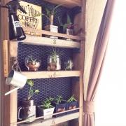 植物/セルフペイント/DIY/照明/広松木工/ストッケ…などに関連する他の写真