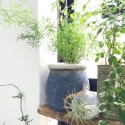 100均/植物/DULTONスケール/ムーミンのパパ/観葉植物/セリア…などに関連する他の写真