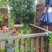 2015/06/15/朝の1枚/玄関ガーデン/セダムわさわさ計画/多肉…などに関連する他の写真