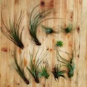 ドライフラワー/観葉植物/階段/雑貨/ルミエールランタン/インテリア…などに関連する他の写真