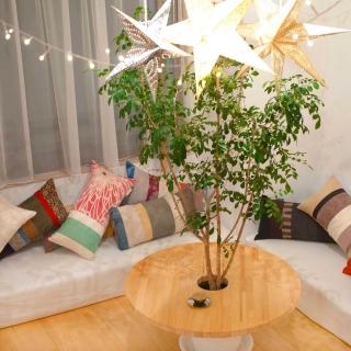リビング 183 植物のある部屋 のインテリア実例
