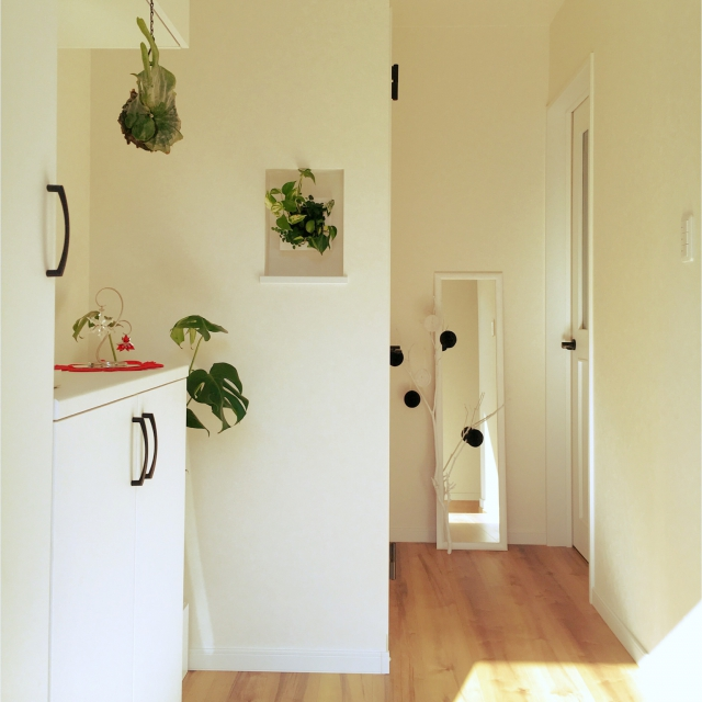 無印良品の観葉植物で壁にもグリーンをプラスしよう♪