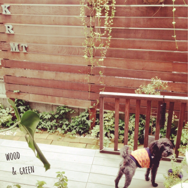 On Walls,犬,アンティーク,ガーデニング,ガーデン,ウッドデッキ,レンガ,愛犬,アイビー,ウッドフェンス,アンティークレンガ,NO GREEN NO LIFE,わんこと暮らす家,コメント嬉しいです✨のインテリア実例 | RoomClip (ルームクリップ)