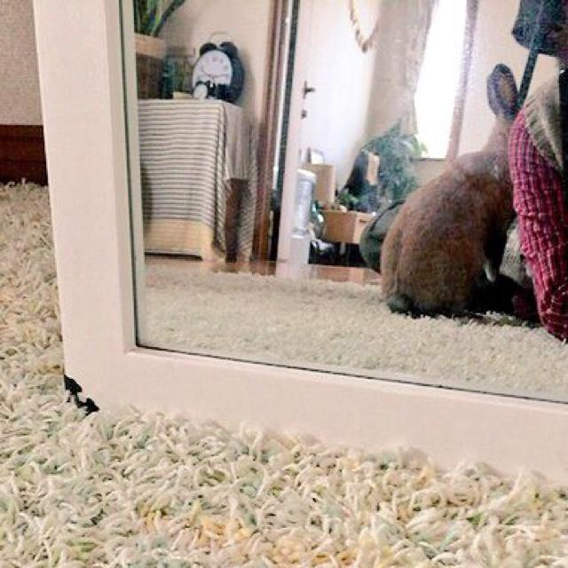 ウサギ部屋のインテリア実例 ...