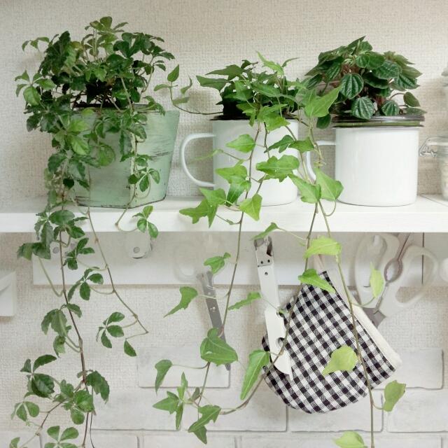 簡単に壁が飾るスペースに!無印良品の壁に付けられる家具