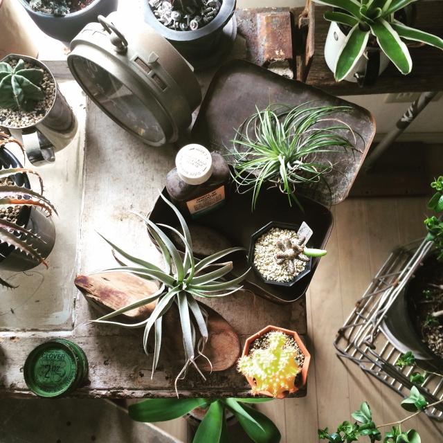 Entrance,植物,サボテン,アンティーク,ビンテージ,インダストリアル,エアープランツ,VINTAGE & MILITARYのインテリア実例 | RoomClip (ルームクリップ)