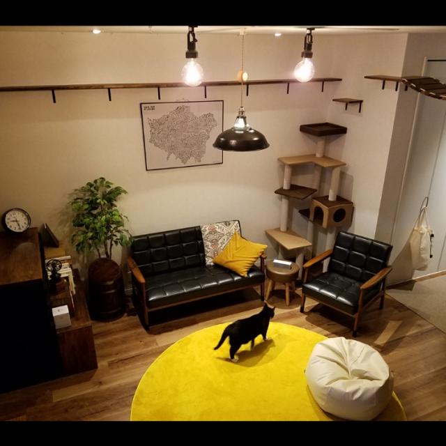 猫好き向け♡キャットウォーク&ステップの手作り作品集