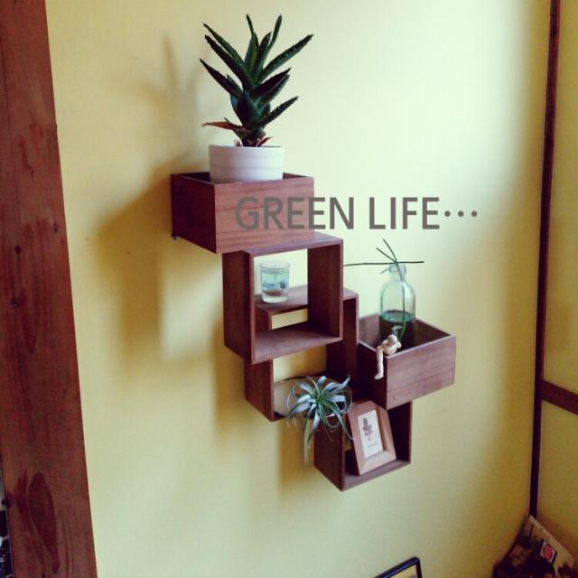 My Shelf,植物,green,壁紙,ダイソーBOXリメイク,今日も頑張りましょうp(^^)q,BOXでプランターをq(^-^q)のインテリア実例 | RoomClip (ルームクリップ)