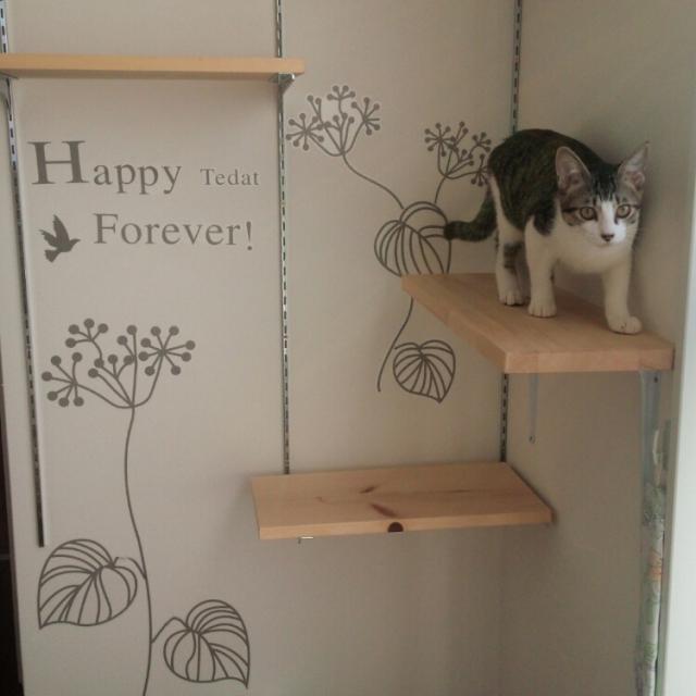猫も人もHAPPY♡インテリアとして楽しむキャットウォーク
