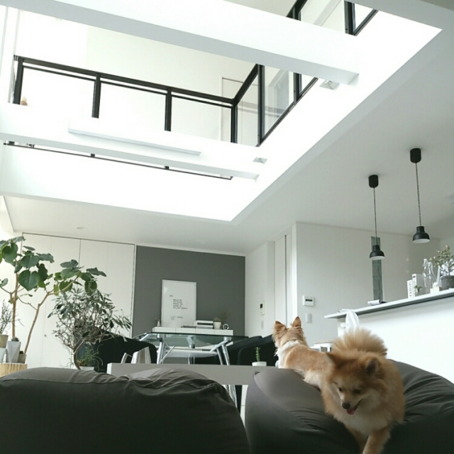 Overview,無印良品,犬,モノトーン,ウンベラータ,手作りライト,グレーのインテリア実例 | RoomClip (ルームクリップ)