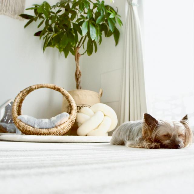 犬との暮らしをもっと快適に!わんこが喜ぶ暮らしのヒント