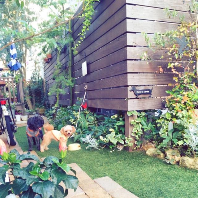 On Walls,植物,庭,ガーデニング,garden,ガーデン雑貨,エクステリア,ウッドフェンス,外構,わんこと暮らす家,グリーンのある暮らし,Ig→risa6100のインテリア実例   RoomClip (ルームクリップ)
