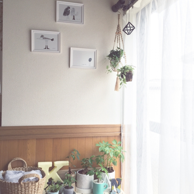 On Walls,シュガーバイン,パキラ,カポック,中古住宅,ディスキディア,NO GREEN NO LIFE,カジュマル,今年の目標は「枯らさない」のインテリア実例 | RoomClip (ルームクリップ)