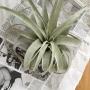 My Shelf/エアプランツ/チランジア/キセログラフィカ/SOLSO FARM/NO GREEN NO LIFE/いいね!ありがとうございます♪/緑のある暮らしに関連する部屋のインテリア実例