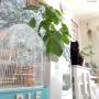 Lounge/IKEA/植物/タペストリー/スチールラック/ねこ/インコ/セリア/salut!/フランフラン/エアプランツ/ウンベラータ/サリュ/黒猫/生活感/ねこのいる風景/セキセイインコ/ごちゃごちゃ/プラントハンガー/ねこ部/バスロールサイン/NO GREEN NO LIFE/ねこのいる日常/プラハン/flancflancに関連する部屋のインテリア実例