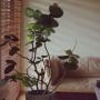 Lounge/観葉植物/ソファ/広松木工/観葉植物のある部屋/NO GREEN NO LIFE/シーグレープ/くつろぎの場所に関連する部屋のインテリア実例