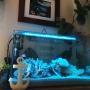 My Shelf/観葉植物/照明/ナチュラル/DIY/多肉植物/マリンスタイル/Oceanに関連する部屋のインテリア実例