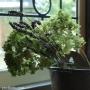Kitchen/窓/ステンドグラス/アンティーク/ドライフラワー/ラベンダー/花器/イギリス/装飾/アナベル/ポートベロに関連する部屋のインテリア実例