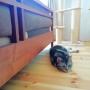 Lounge/猫/キャットタワー/広松木工に関連する部屋のインテリア実例