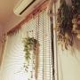On Walls/観葉植物/ハンドメイド/DIY/ドライフラワー/古いアパートに関連する部屋のインテリア実例